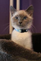 Pep'S, chat Gouttière