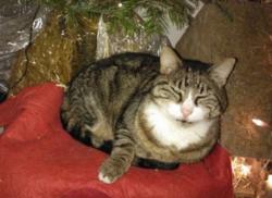Pépère, chat Gouttière