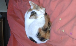 Pepette, chat Gouttière