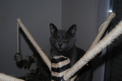 Pepita, chat Gouttière