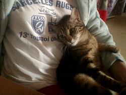 Pépite, chat Gouttière