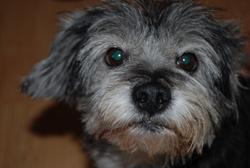 Pépito, chien