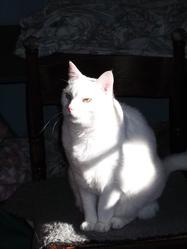 Pépone, chat Gouttière