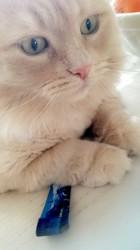 Pepper, chat Gouttière