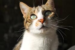 Pepsi, chat Gouttière