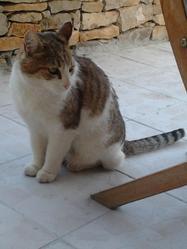 Pepsii, chat Gouttière