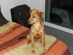 Percy, chien
