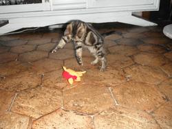 Perdue, chat Gouttière