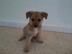 Perla, chien