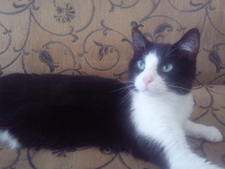 Perle, chat