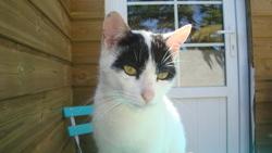 Perle Décédé, chat