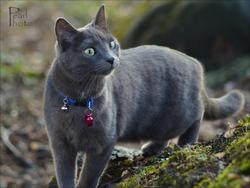 Perle, chat Gouttière