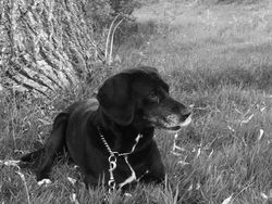 Perle, chien