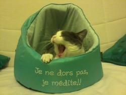 Persée, chat