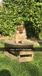 Peter, rongeur Lapin