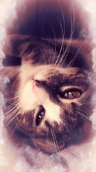 Peticha, chat