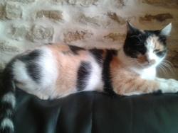 Petit Boudin, chat