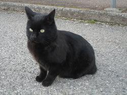 Petit-Bonheur Perdu, chat Gouttière