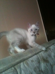 Petit Prince, chat