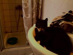 Petita, chat