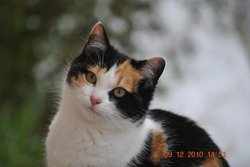 Petite Boule, chat
