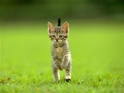 Petite Plume, chat