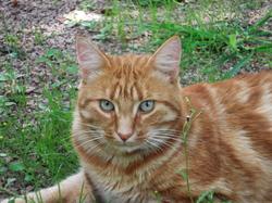 Petitgrio , chat