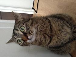 Pétronille, chat Gouttière