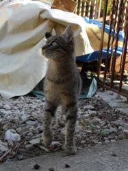 Phébé, chat