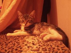 Phenix, chat