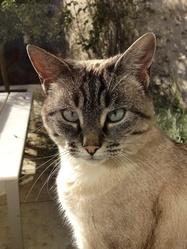 Philomène, chat Gouttière