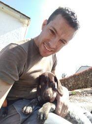 Philou, chien Labrador Retriever