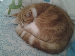 Phoebus, chat