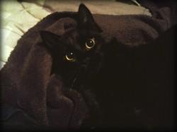Piallon, chat