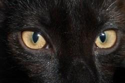 Picasso, chat Gouttière