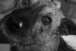 Picatchou, chien