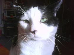 Picsou, chat Gouttière