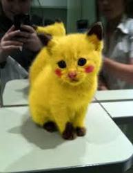 Pikachu, chat