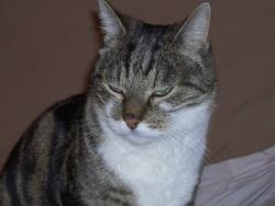 Pillou, chat Gouttière