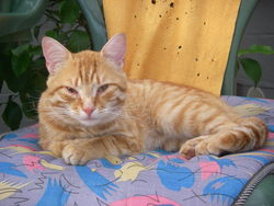 Pilou, chat Gouttière