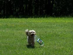 Pilou, chien