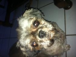 Piloue, chien
