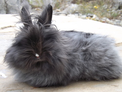 Pimkie Lolo Rosa, rongeur Lapin