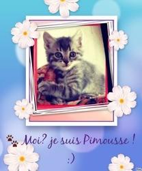 Pimousse, autres
