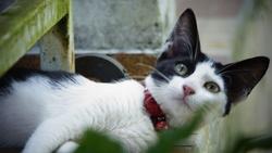 Pin-Up, chat Gouttière