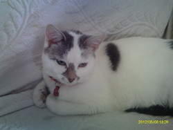Pinceau, chat