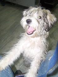 Pino, chien