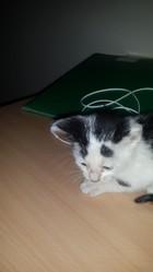 Pino, chat Gouttière