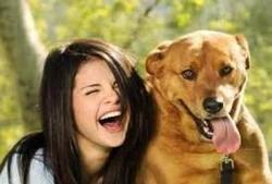 Pinscher, chien