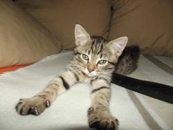 Fouiny, chat Gouttière